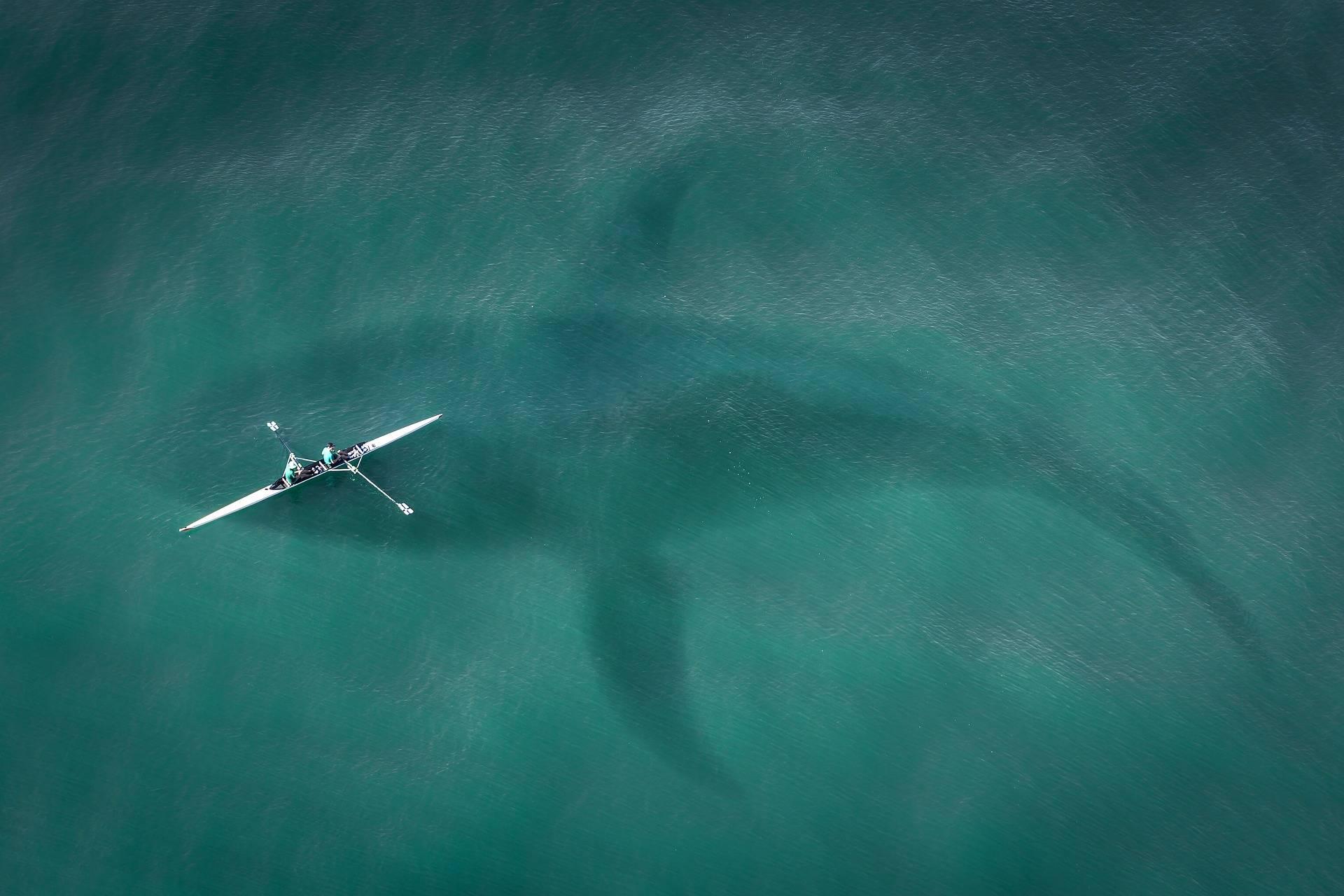 ballena Limpieza por ultrasonido